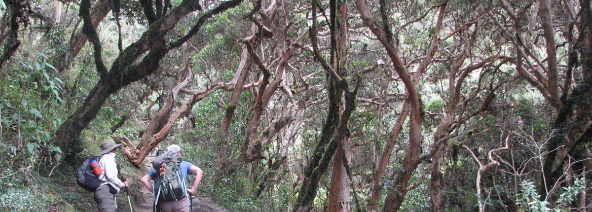 Inca Trail durch den Wald