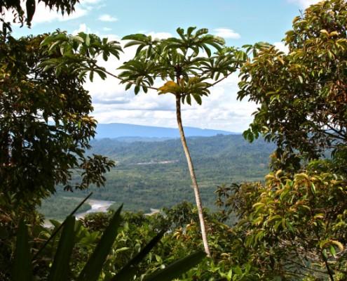 Manu National Park: Atemberaubende Artenvielfalt
