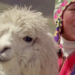 Lamas auf dem Inka Trail