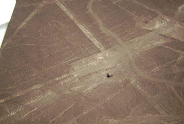 Nazca Linien Parrot