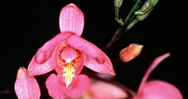 Orchideen im Park