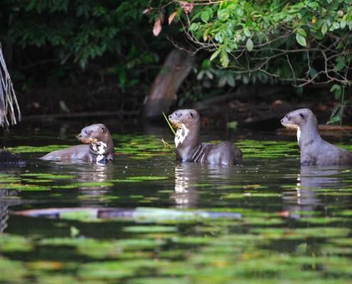 Die unerschöpfliche Flora & Fauna im Manu National Park