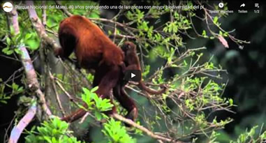 Videos Manu Nationalpark Peru