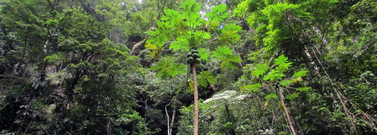 tarapoto regenwald region san martin