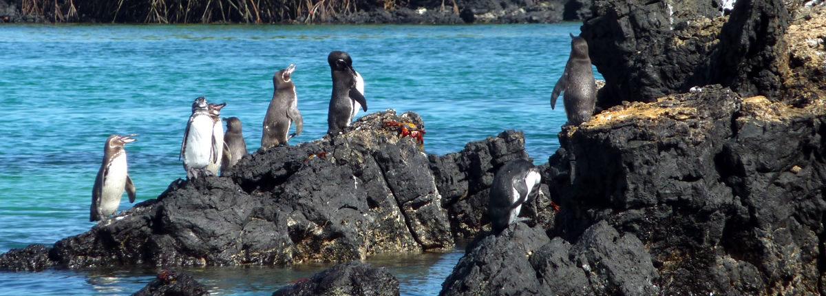Abwechslungsreiche Südamerika-Reise: Von Galápagos nach Machu Picchu