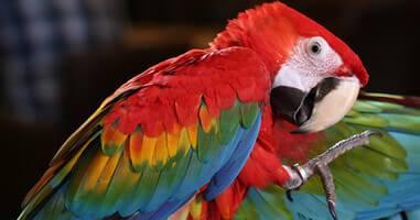 Tiersafari Tour im Naturschutzgebiet Pacaya
