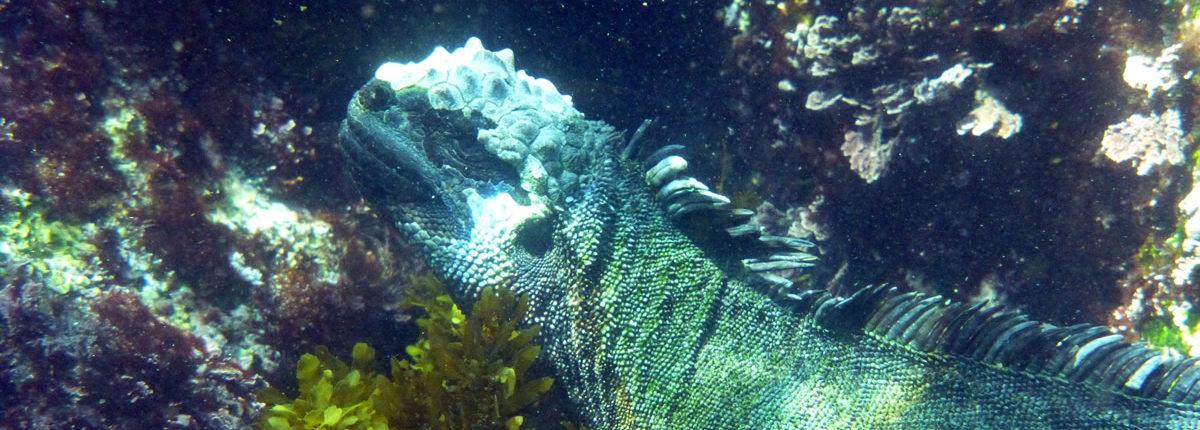galapagos tierwelt