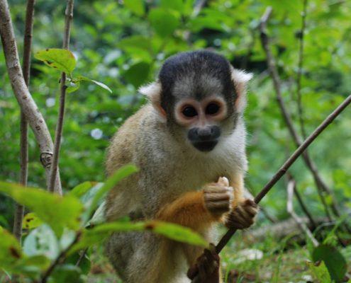 Limas Zoo - Der Parque de las Leyendas