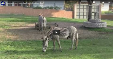 Videos Parque de las Leyendas