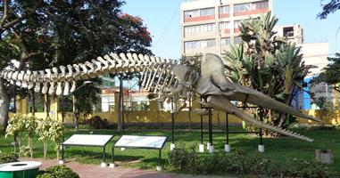 Museo de Historia Natural Lima Peru