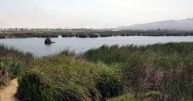 Pantanos de Villa Chorrillios Lima Peru