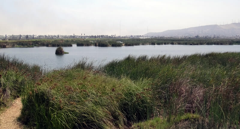 Pantanos de Villa Chorrillios