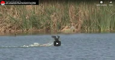 Videos Wildschutzgebiet Pantanos de Villa Chorrillos