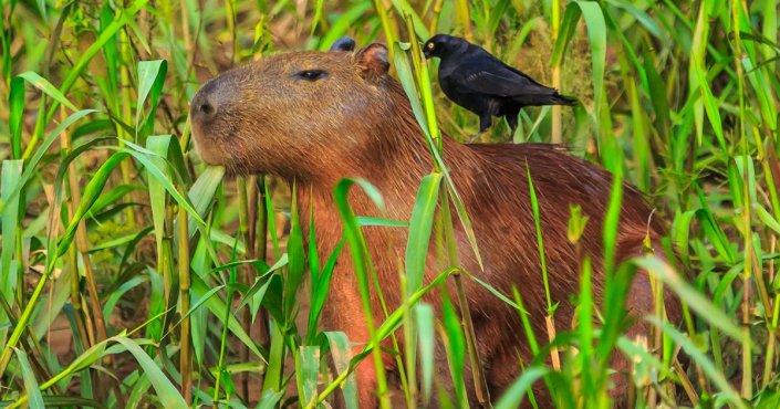 Tambopata Nationalpark