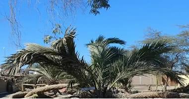 Las palmeras de siete Cabezas