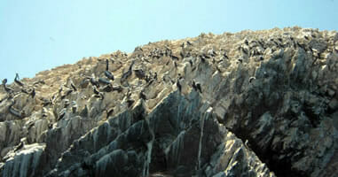 Pelikane im Nationalpark