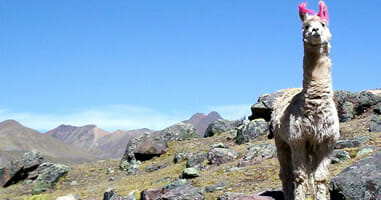 Wanderung im Tinajani Canyon und Hochebene von Taraco